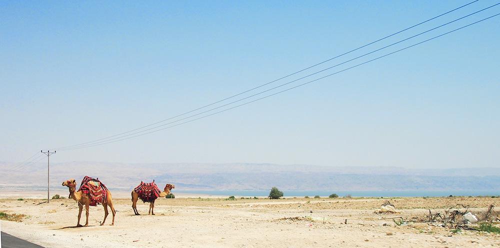 Israël | Le Cocotier Doré
