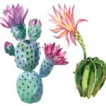 stock-illustration-78715103-watercolor-cactus