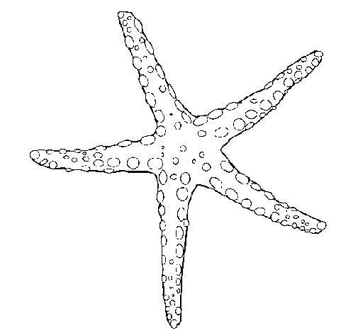 petite-etoile-de-mer-colorear